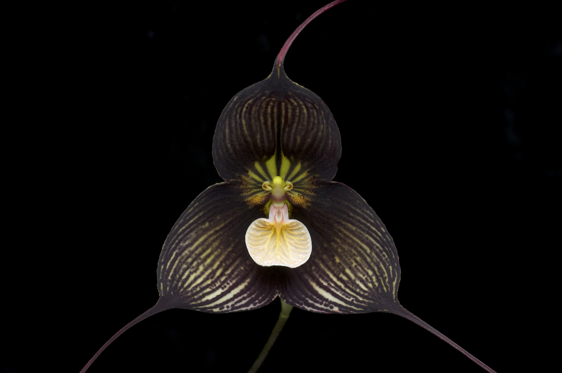 Species from Ecuador Grown by Hawk Hill Nursery, Pacifica, California (photo by Eric Hunt)